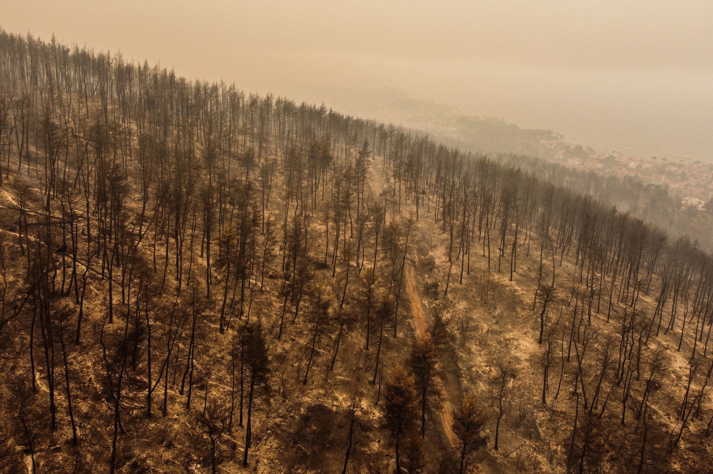 An aerial view of a burnt forest