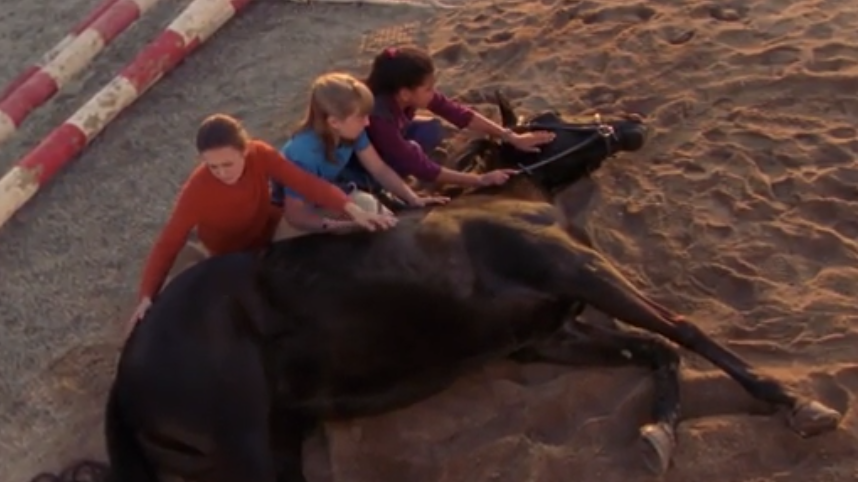 Lisa, Stevie and Carole petting Cobalt as he lays on the ground