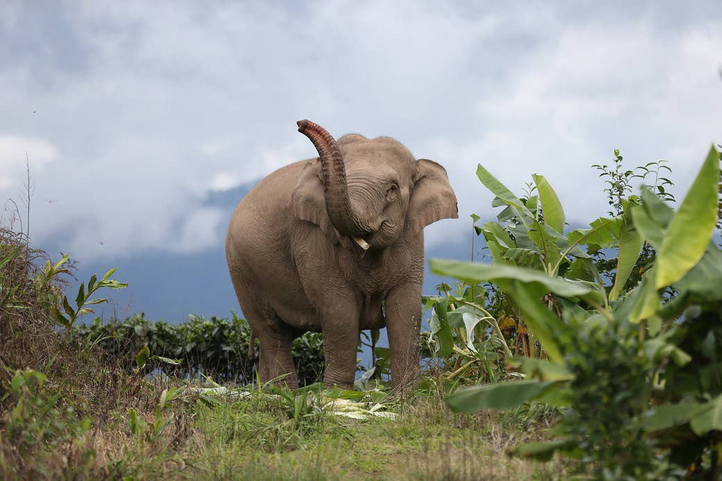 A large elephant with its trunk raised stands amid greenery against a cloud-filled blue sky