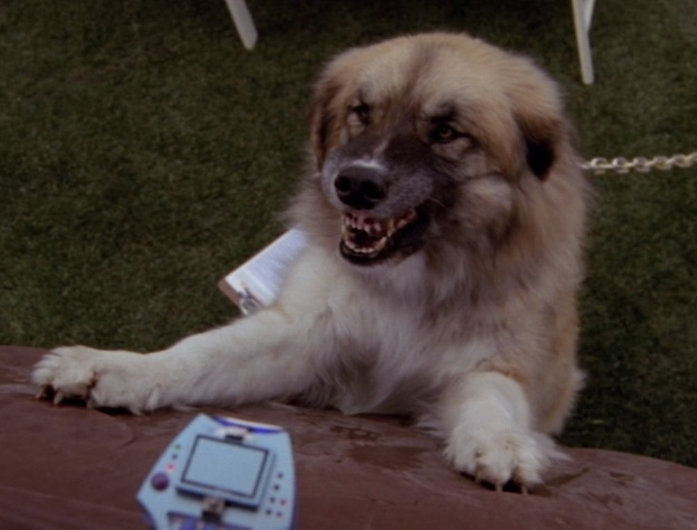 A dog is growling at a dog translating device