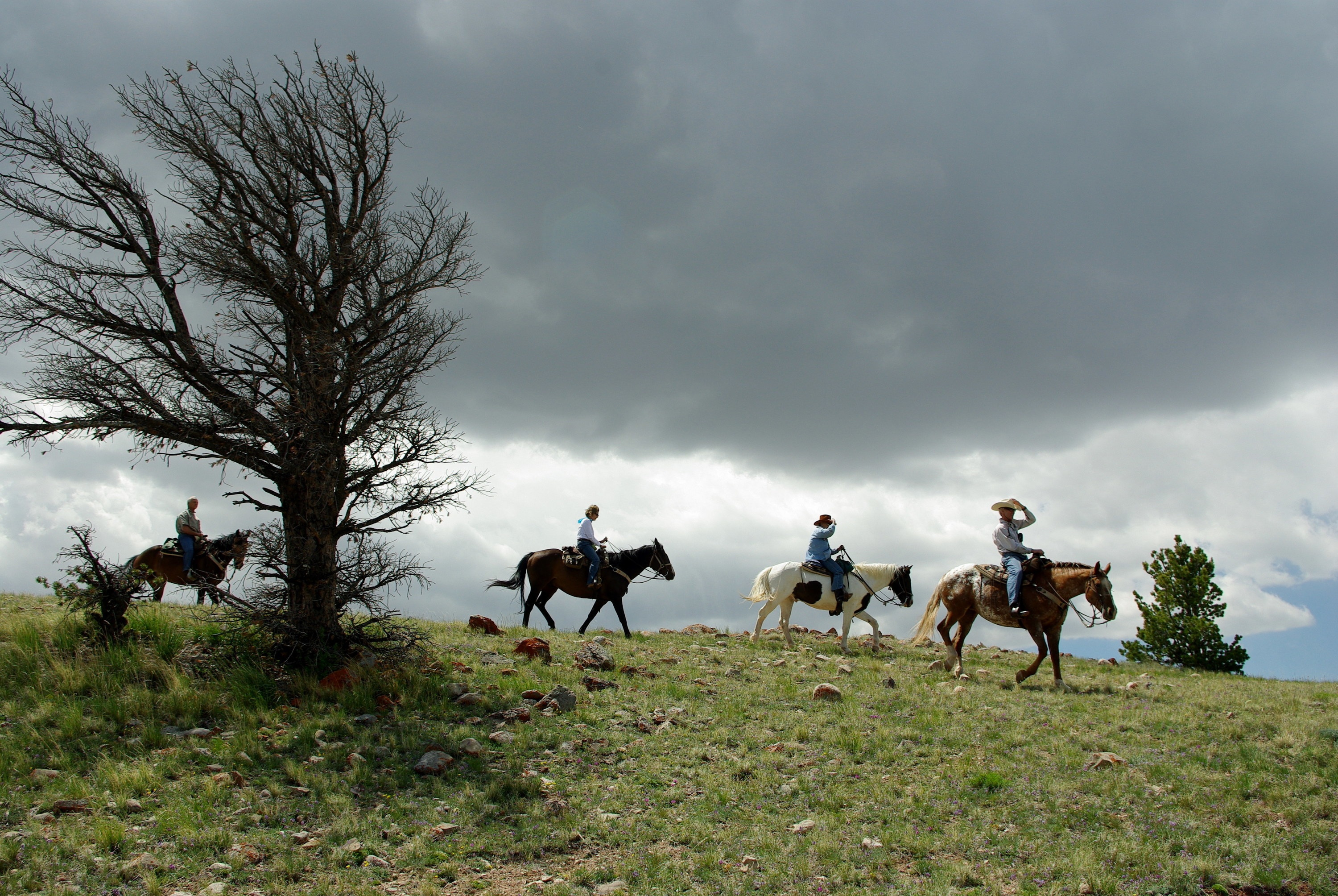 Four people on horseback on a ridge under a cloudy sky, with a dead tree to their right