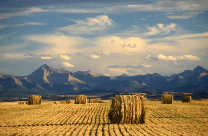 Classic Alberta scene. Hay bales and mountains. Near Longview.