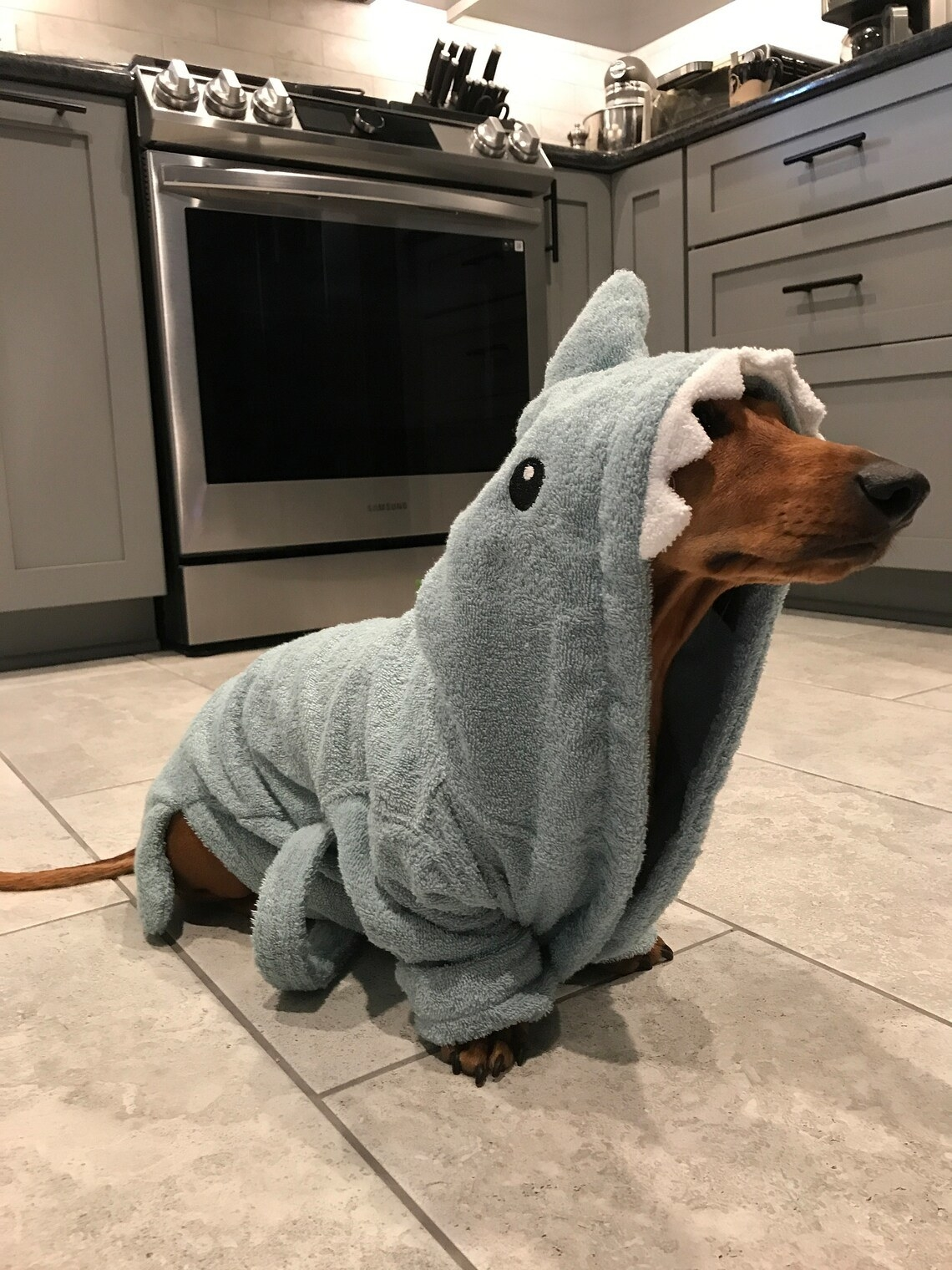 A dog wearing hooded shark towel