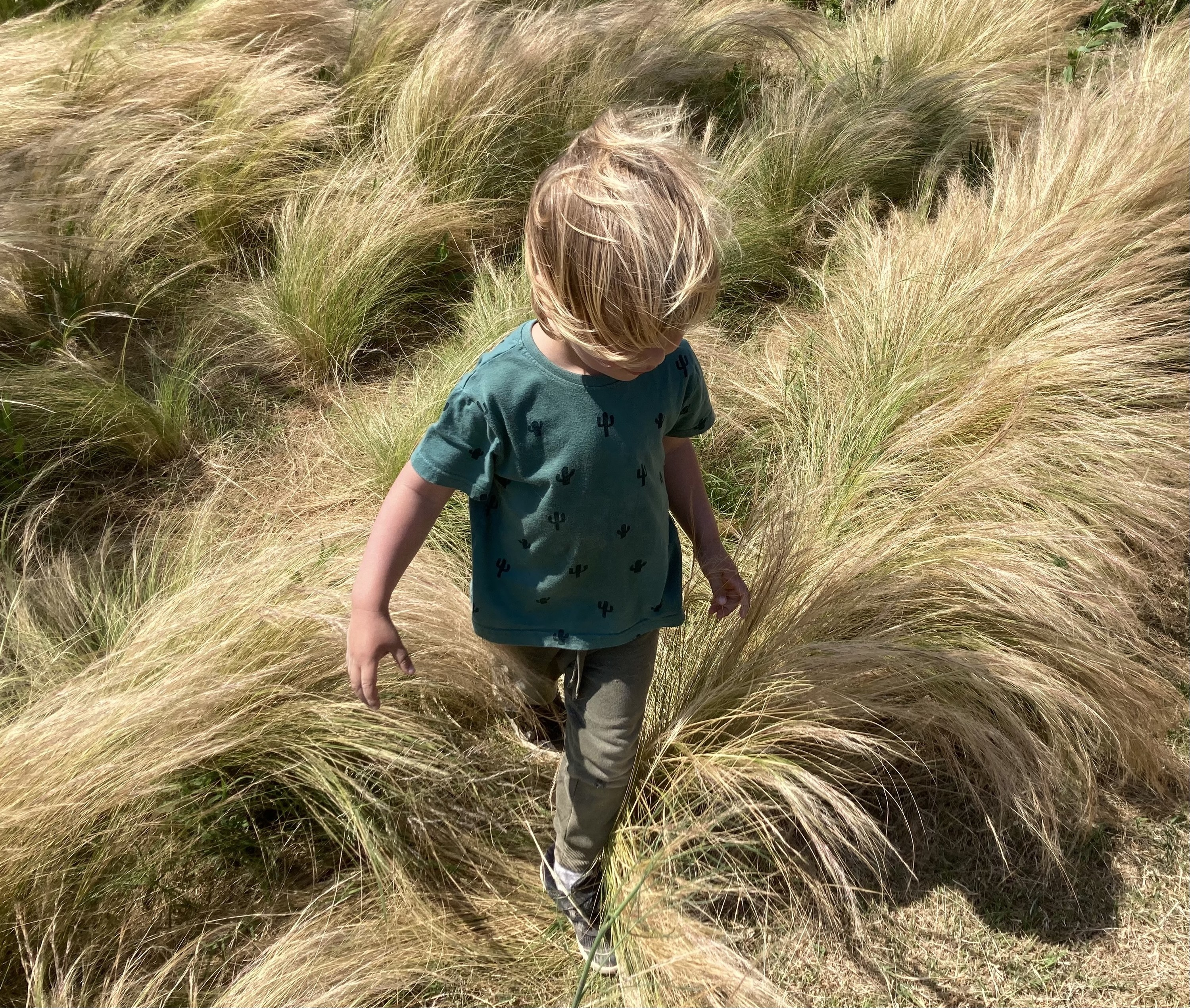 A boy with tousled blonde hair walking through a windy wheat field