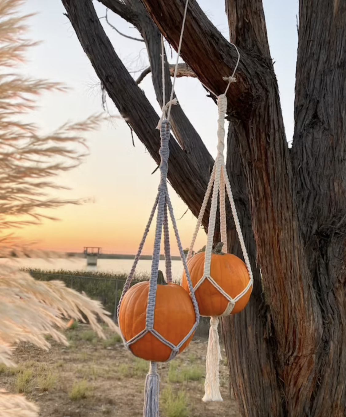 Two pumpkins hang in macrame planters hung from a tree