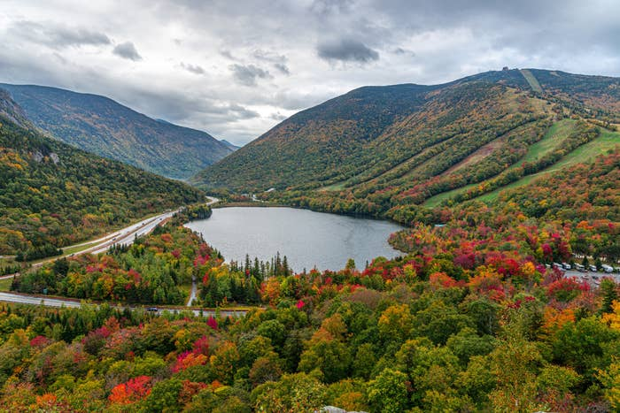 Trees changing color in the White Mountain, New Hampshire.