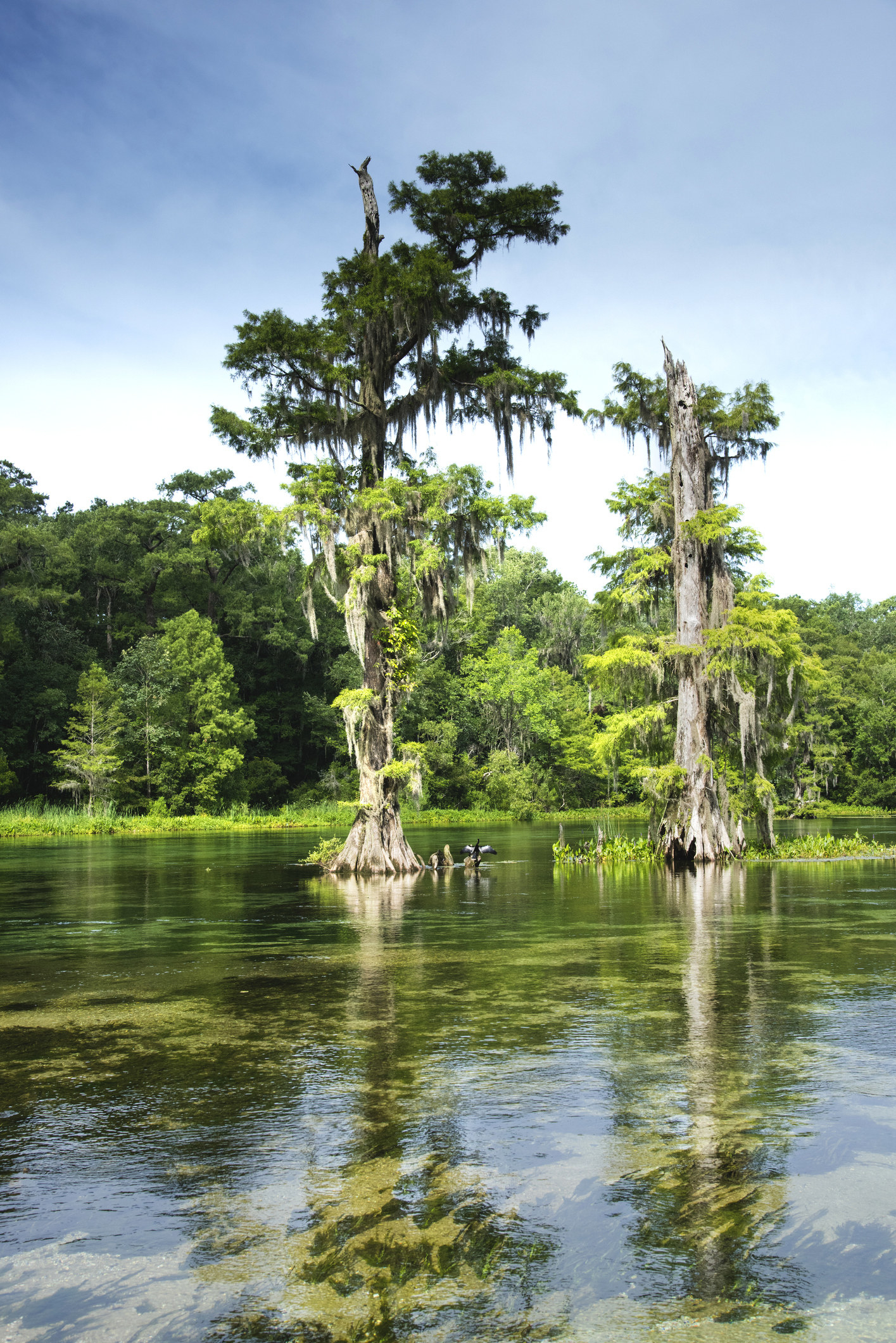 Tall trees atWakulla Springs State Park.