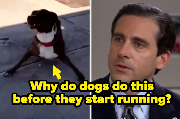 35 People Ask Hilarious Questions About The Weird Things Dogs Do