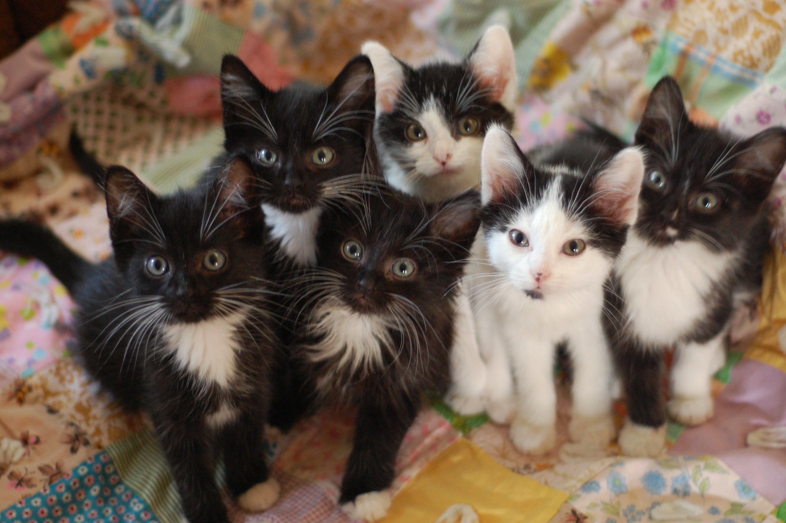 Six kittens looking up at the camera