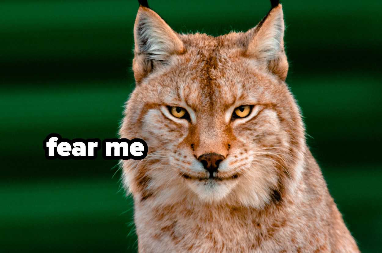 """a bobcat with the text """"fear me"""" by its face"""