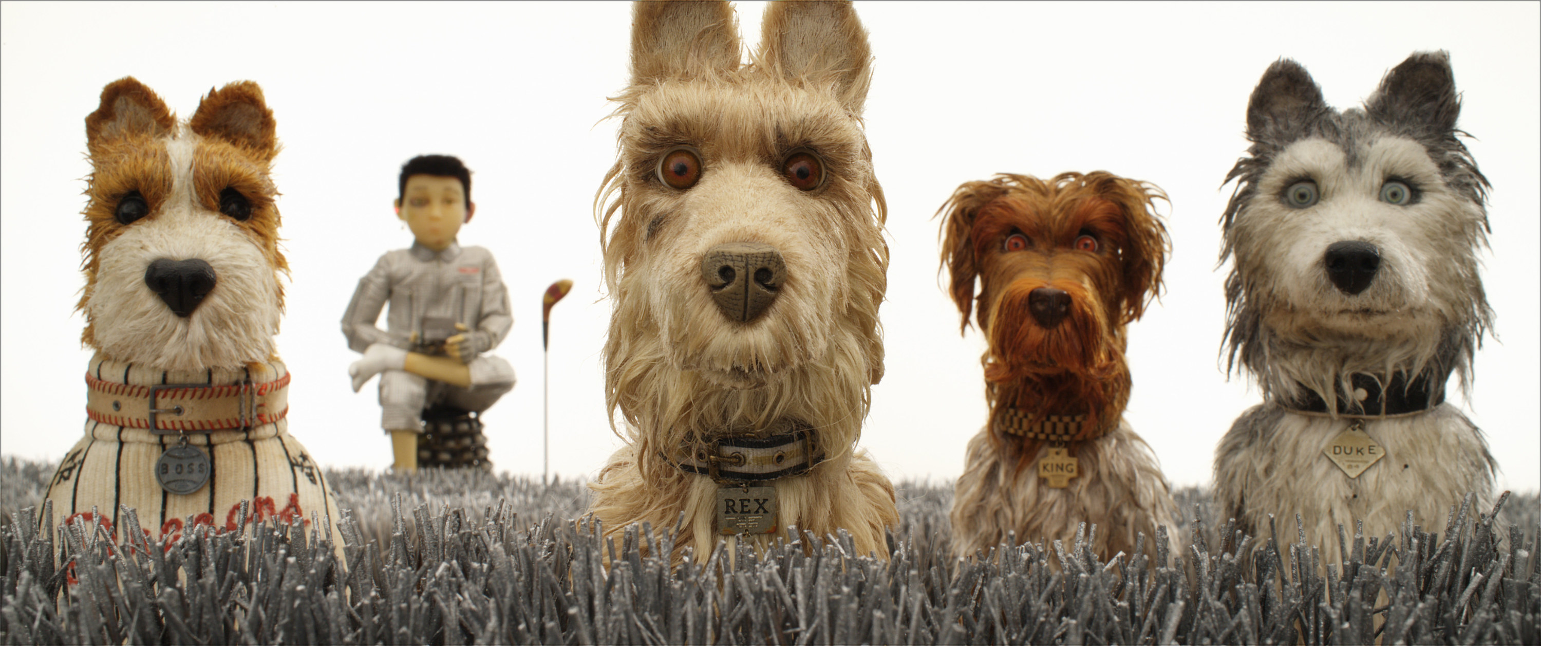 A group of dogs look at the camera