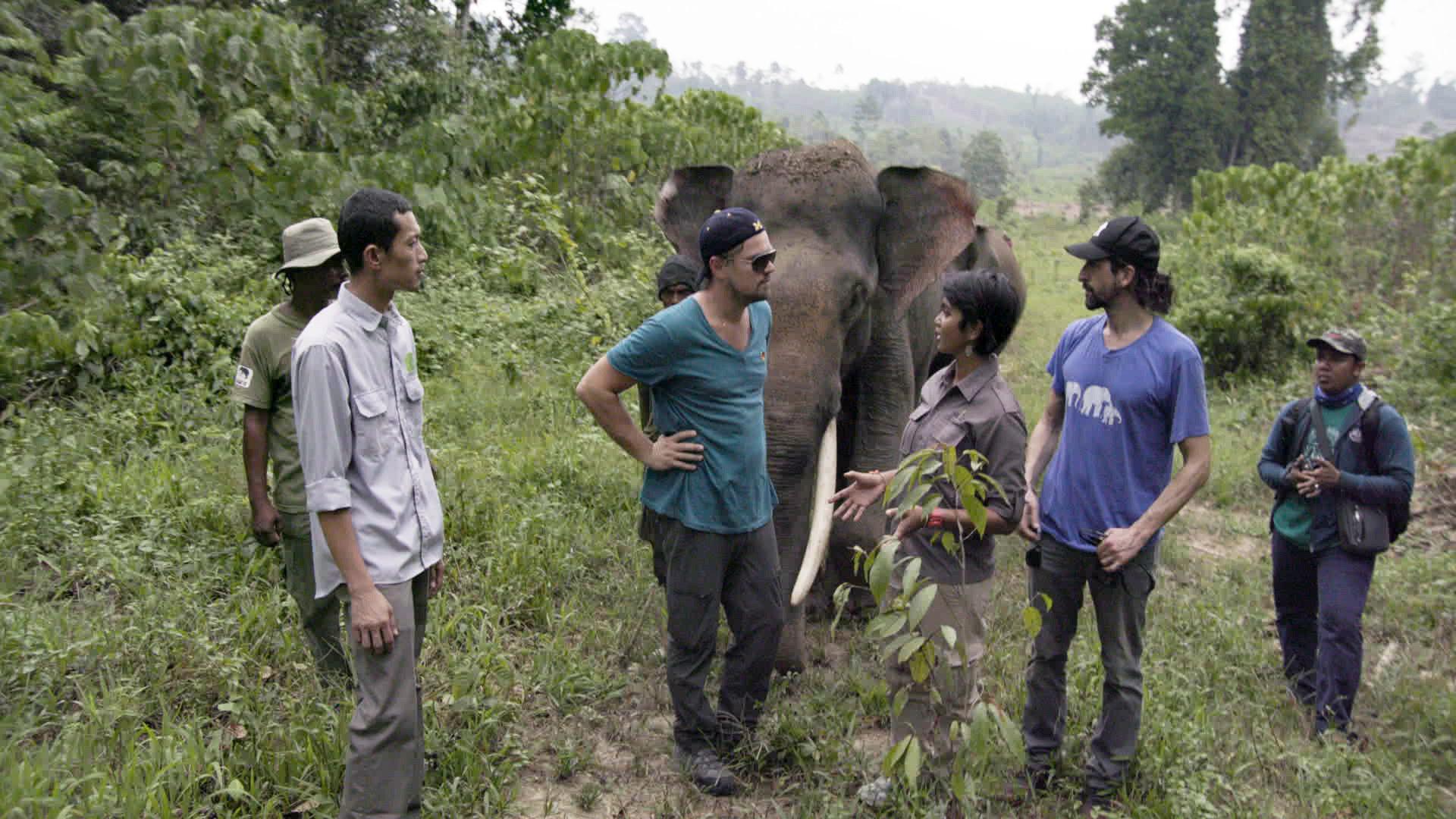"Rudi Putra, Leonardo DiCaprio, and Farwiza Farhan stand near an elephant in the documentary ""Before the Flood"""