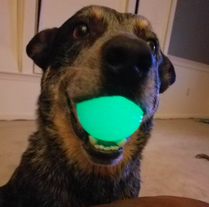 A customer review photo of a dog holding the glowing ball in its mouth