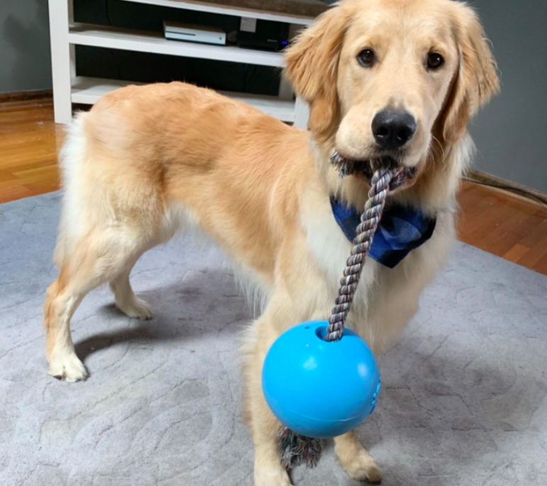 A customer review photo of their dog holding the toy, which is a rope attached to a ball, in its mouth