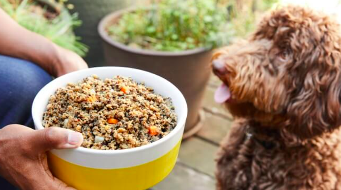 A hand holding a bowl of dog food in front of a hungry looking dog