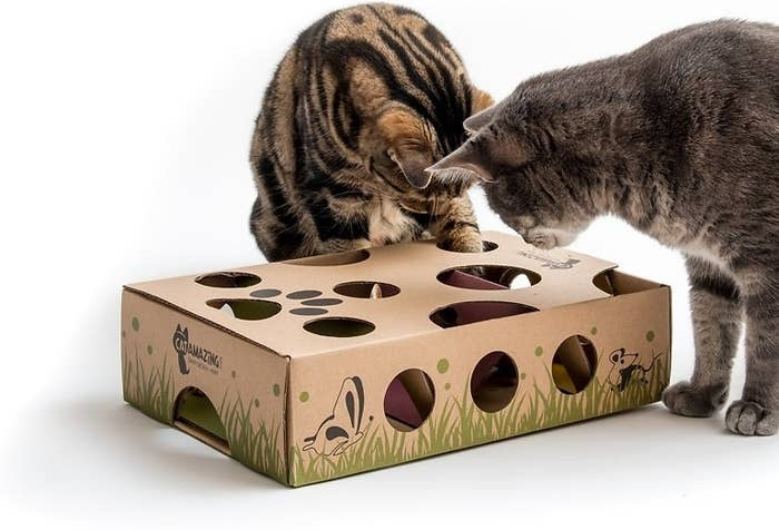 two cats playing with the cardboard puzzle maze