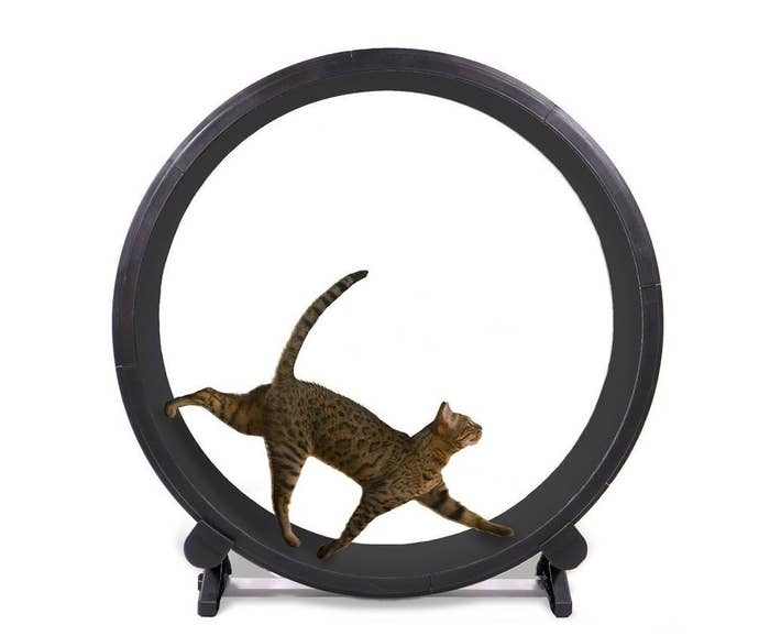 a cat on a black exercise wheel