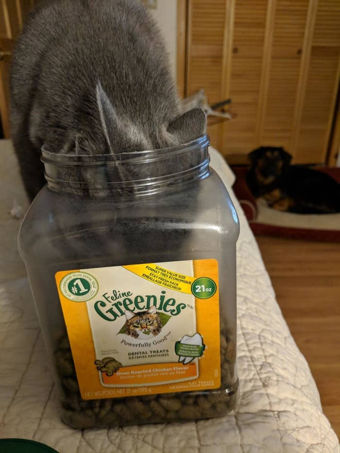 a reviewer's cat with their head stuck in a tub of greenies