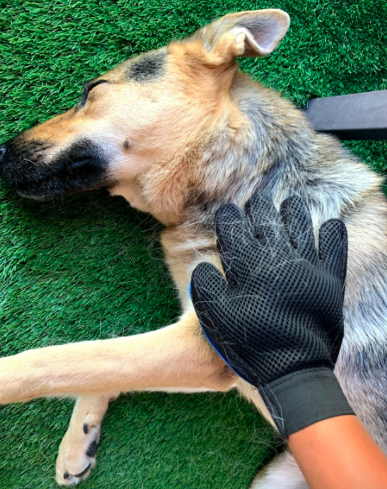A customer review photo of them using the glove to brush their relaxed dog