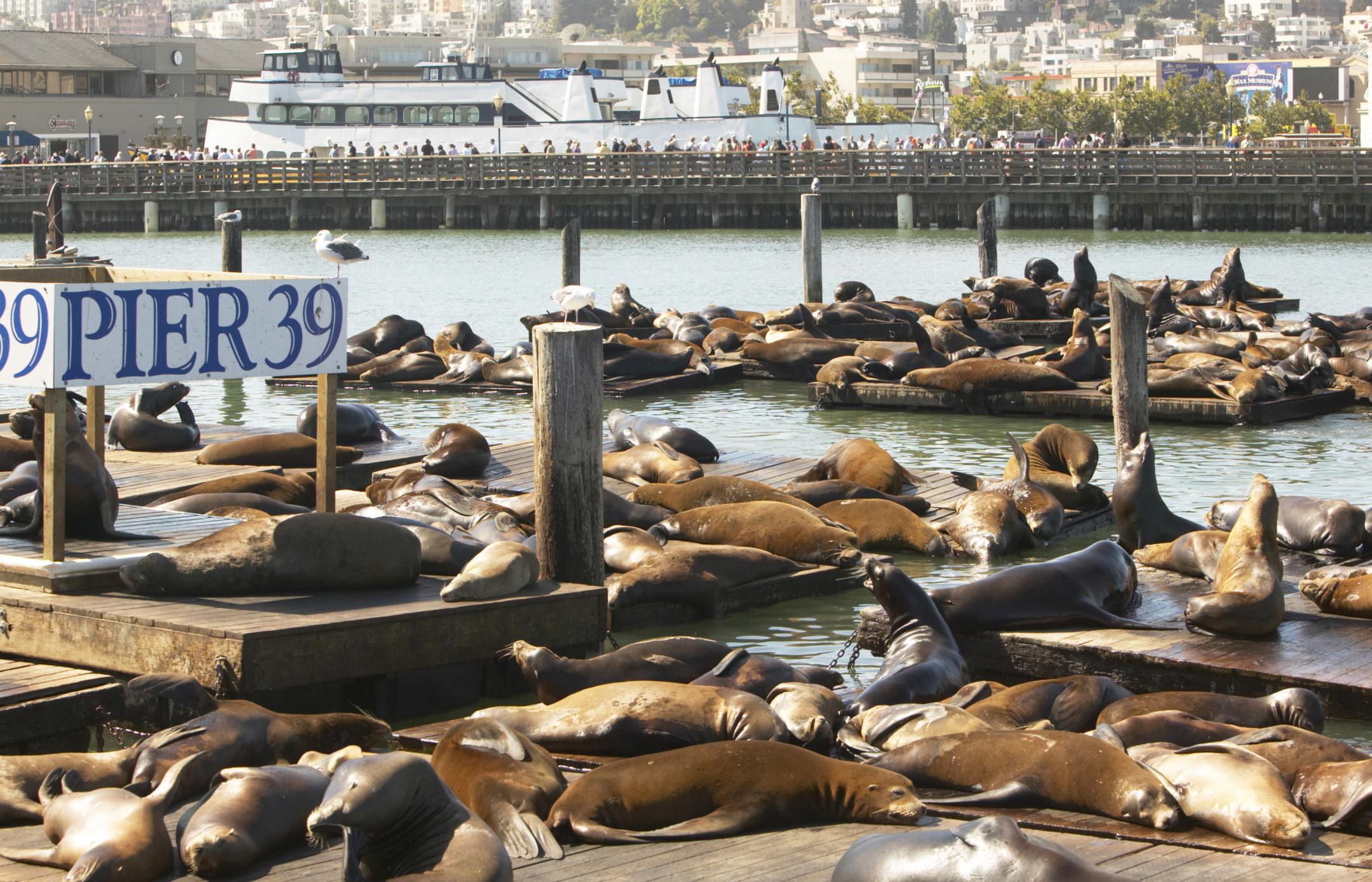 Sea lions at Pier 39 in San Francisco.