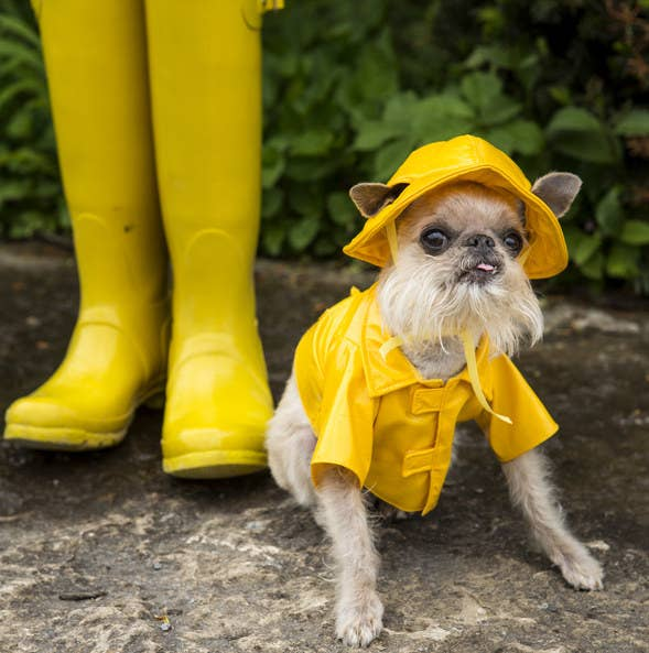 small dog wearing a raincoat and matching hat