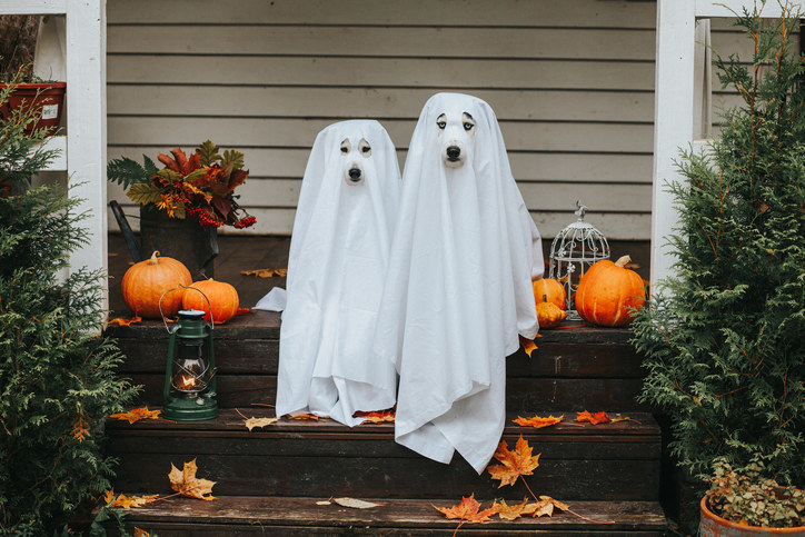 a pair of dogs dressed in ghost costumes for Halloween