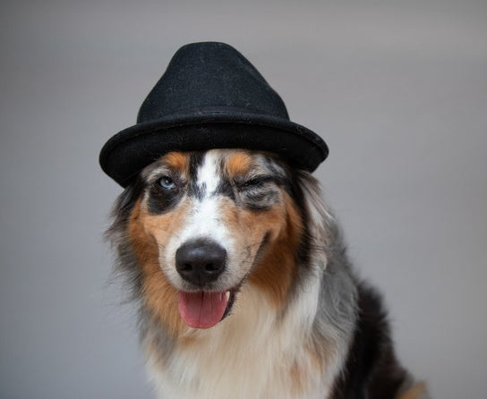 A winking dog wearing a fedora