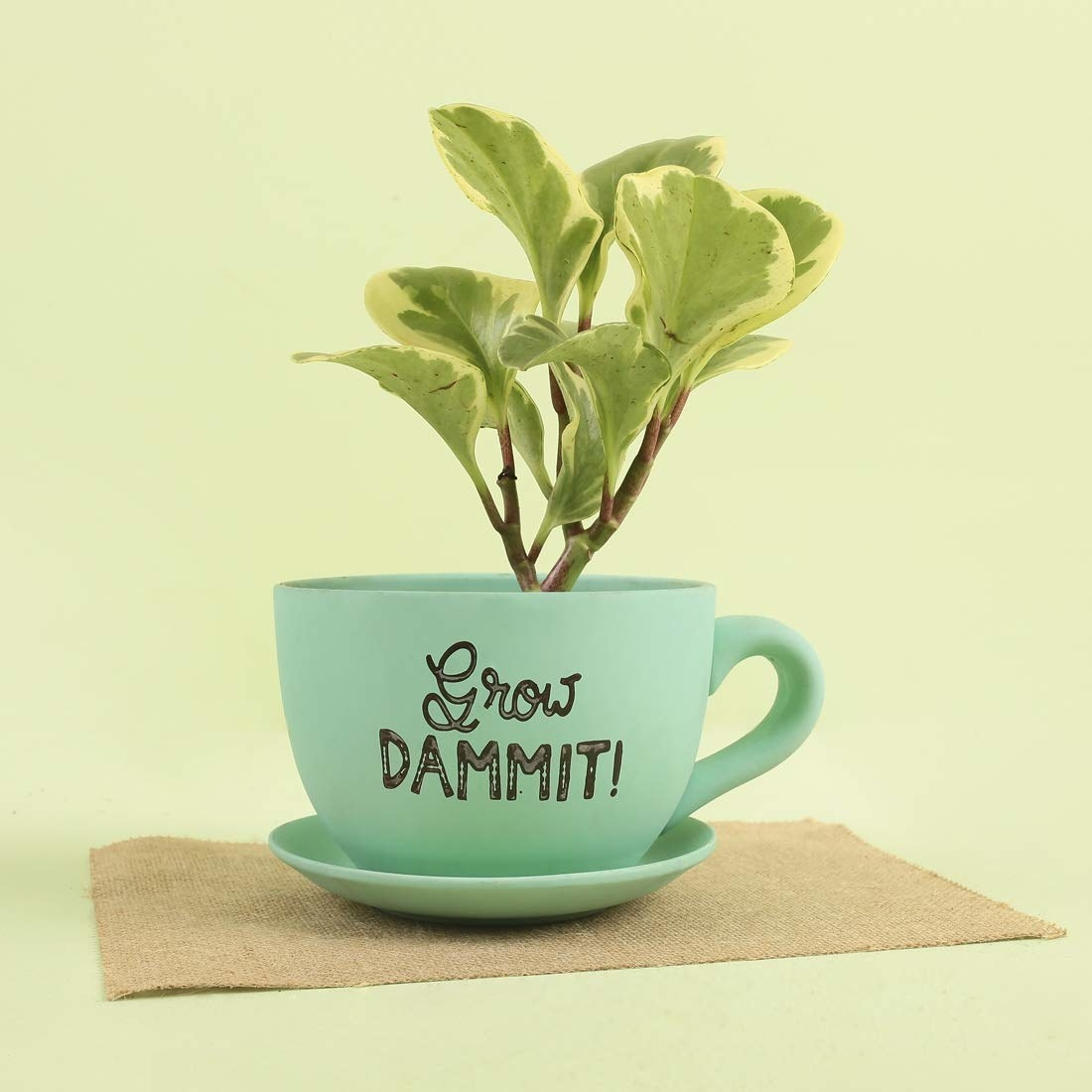 """A green planter in the shape of a mug and saucer with the words - """"Grow Dammit"""" printed on it"""