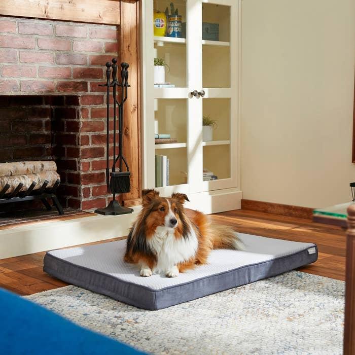 Gray dog bed.