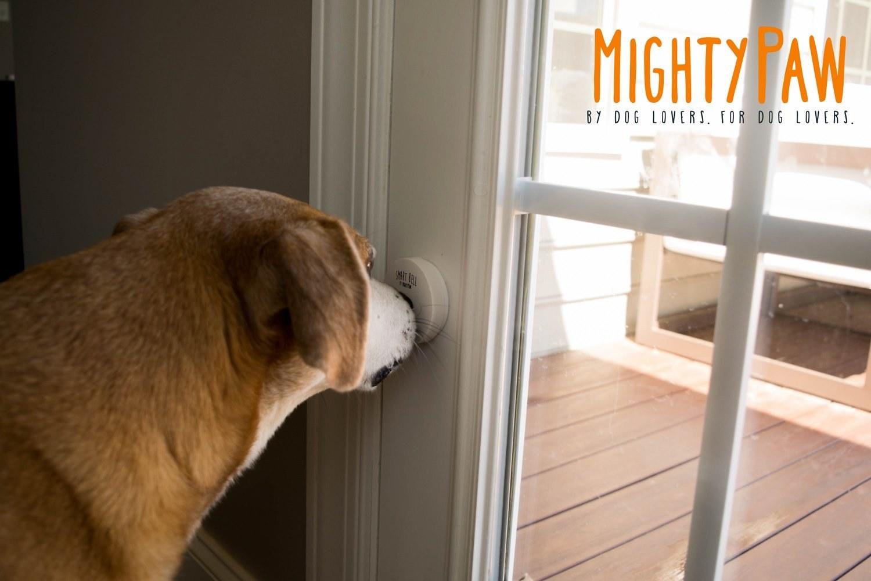 A doggy doorbell.