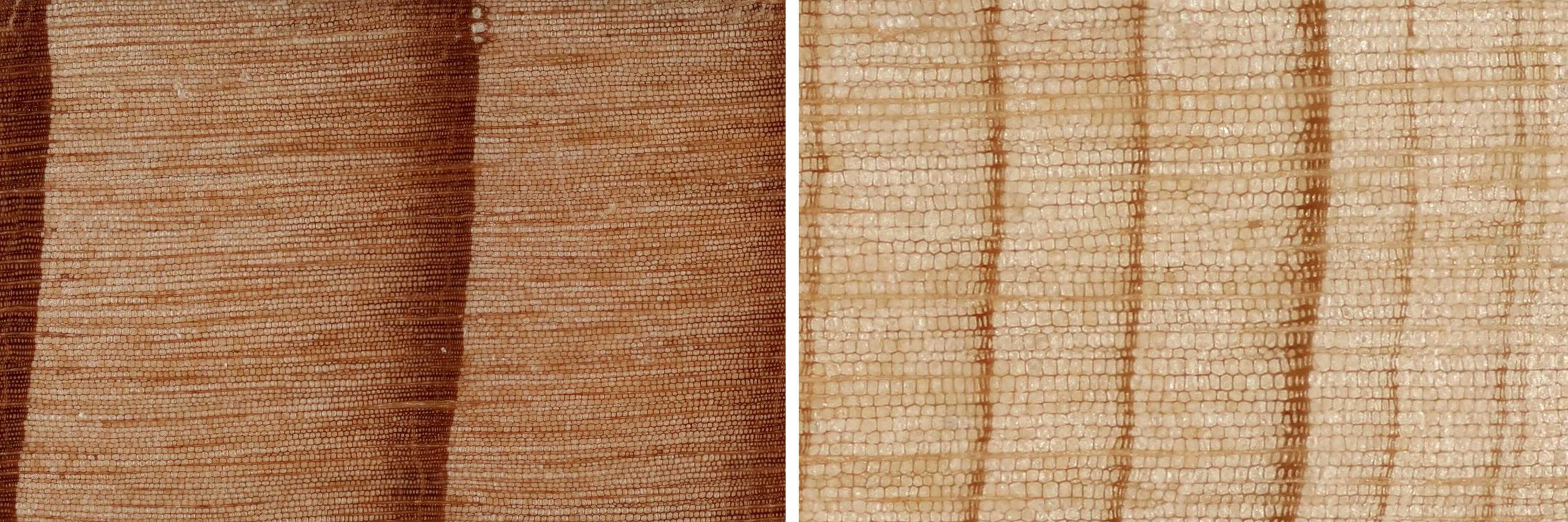 Tree ring scans showing the impact of the drought – trees grow significantly less in times of drought