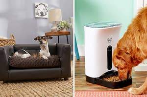 a dog on a small, dog-sized couch; a dog eating from an automatic feeder