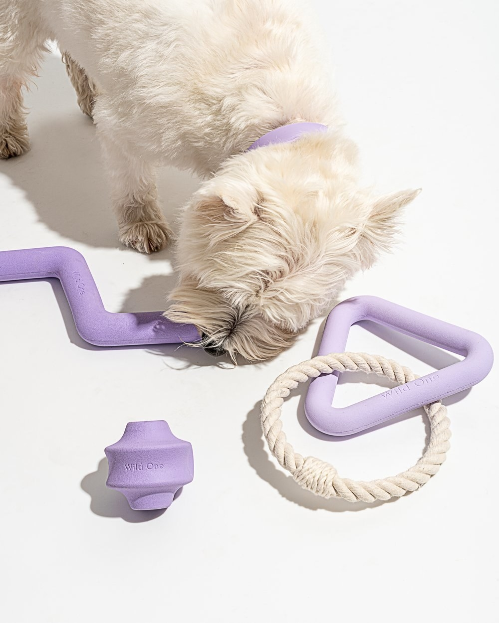 dog playing with three lilac dog toys
