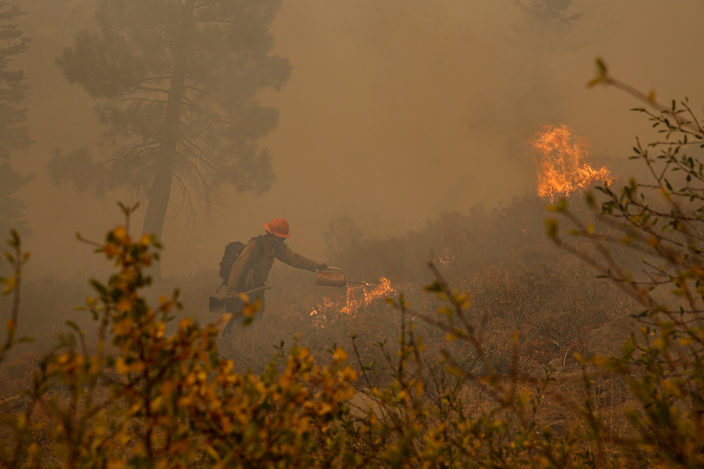 A uniformed firefighter stands in a meadow and pours gas onto a fire