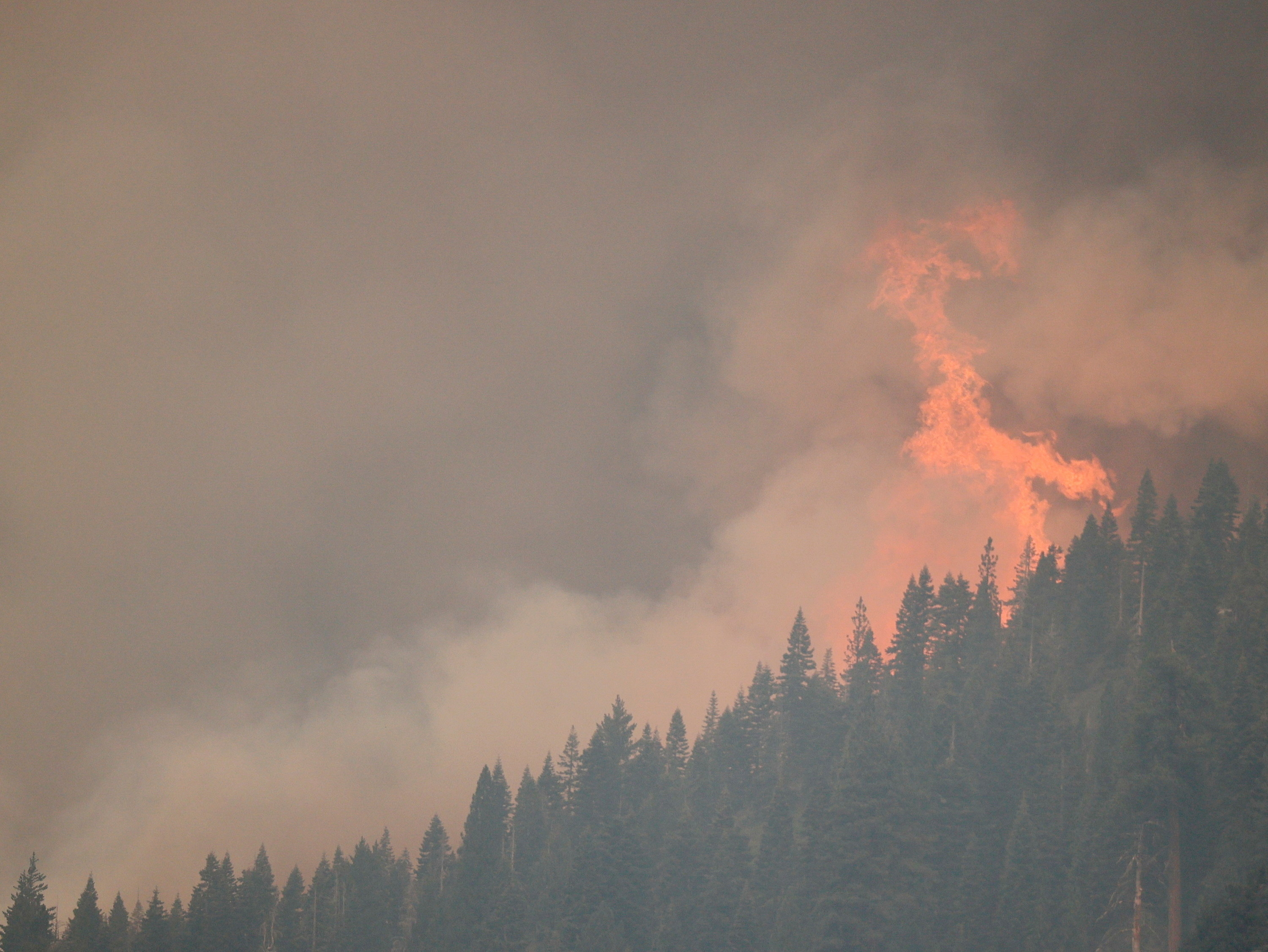 Flames taller than pine trees on a hillside shoot into the sky