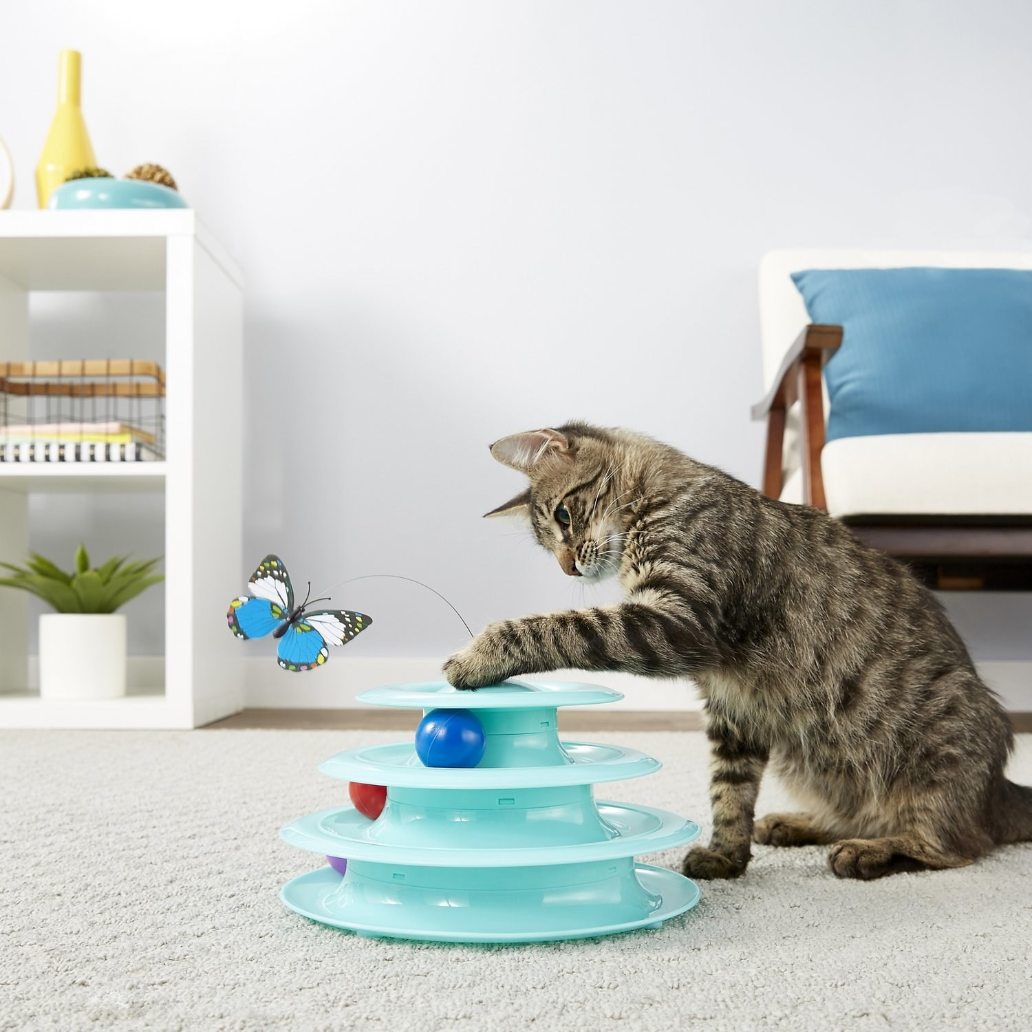 A cat playing with the light blue cat tracks toy