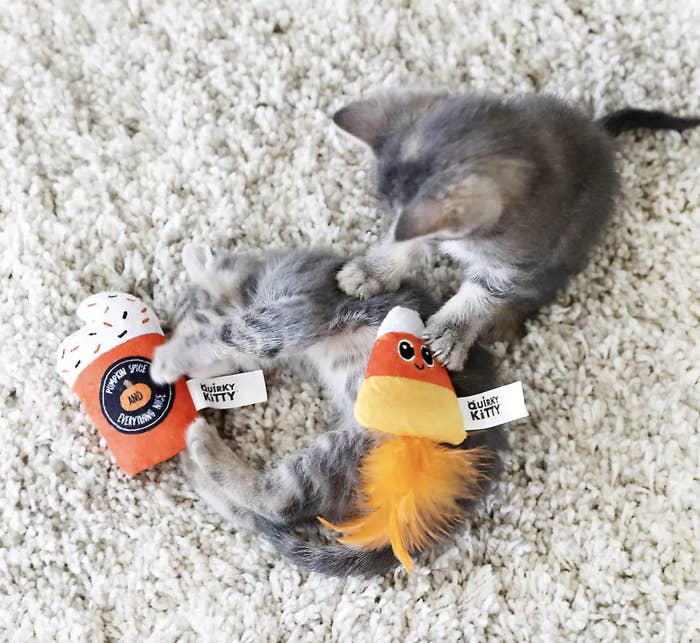Two kittens playing with two toys, one that looks like a pumpkin spice latte, and another that looks like candy corn