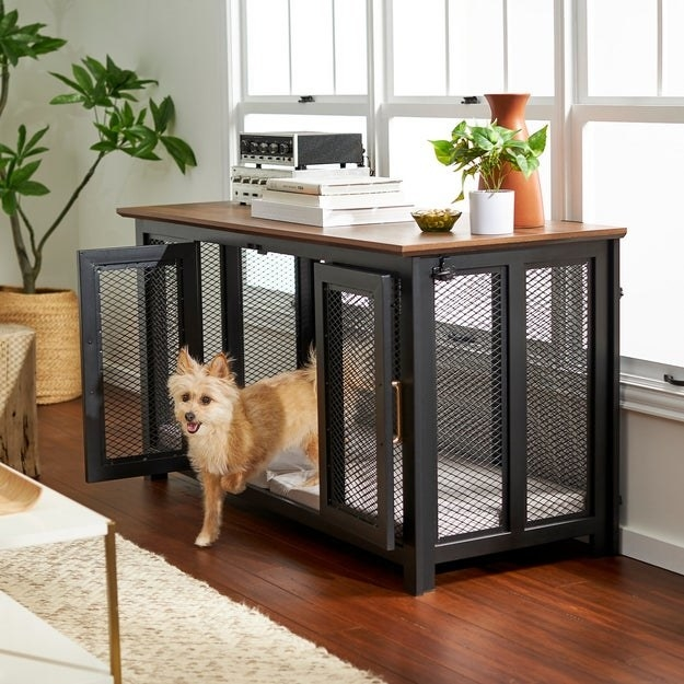 a dog stepping out of the dog crate credenza and the credenza has books a record player and plants on top of it