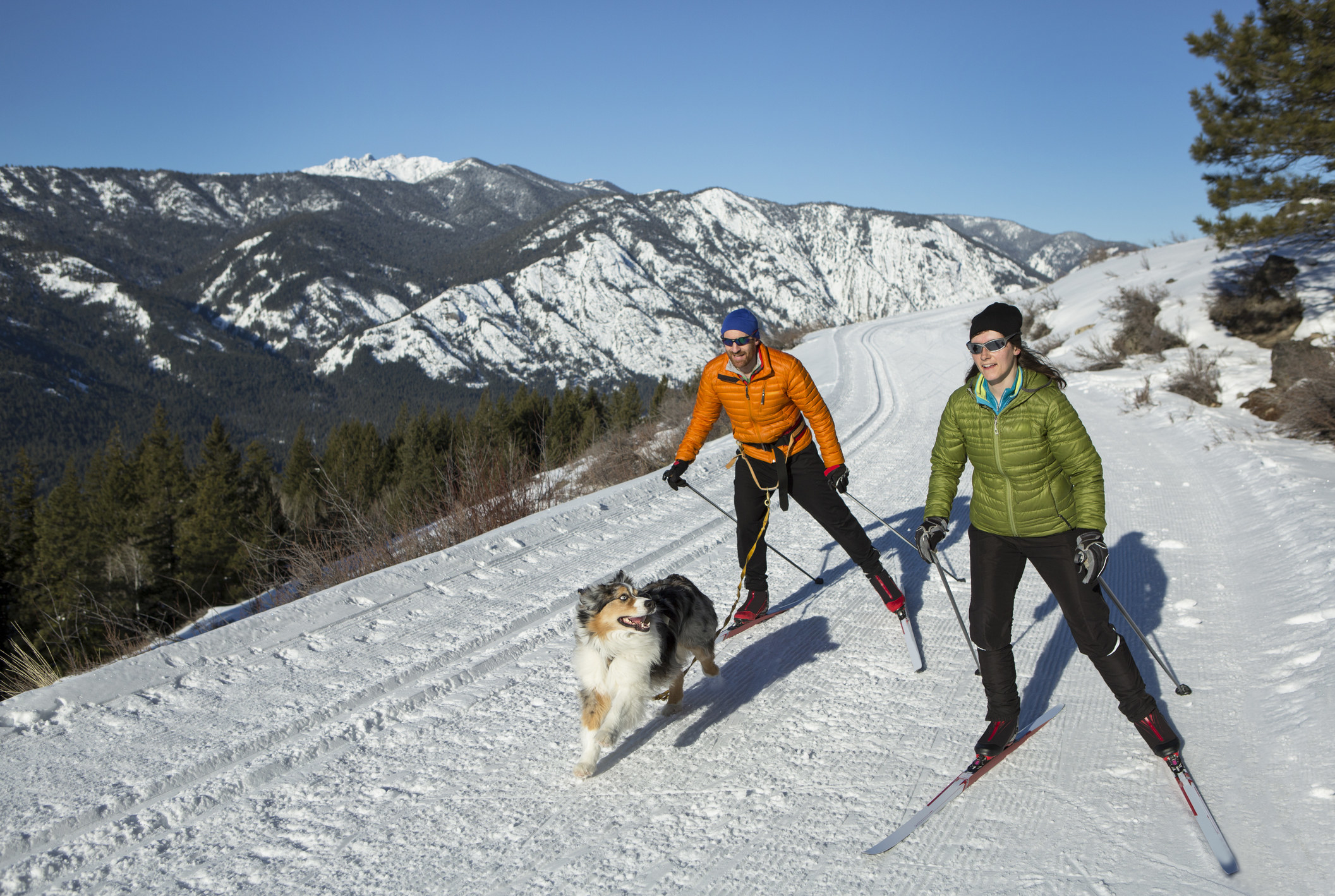 A couple and their dog skijoring.
