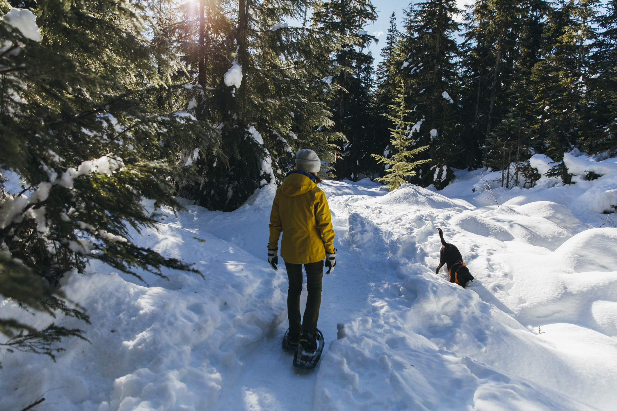 Young woman snowshoeing in woods with pet dog.