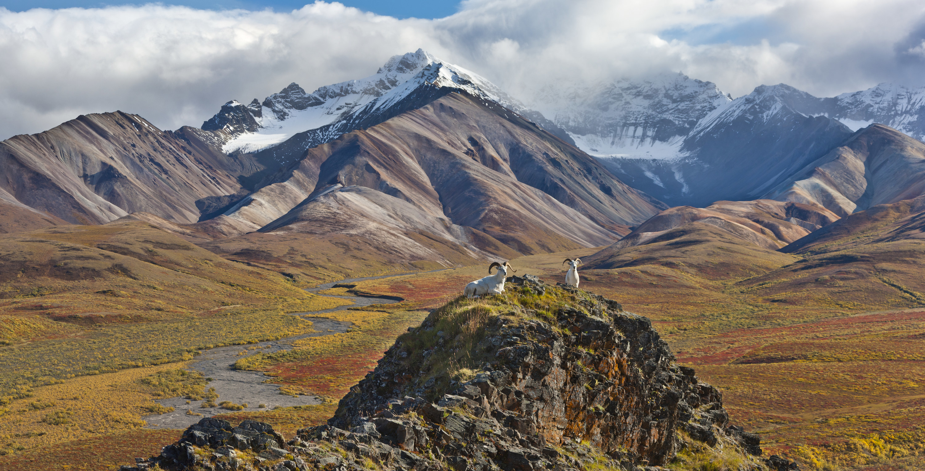 Snow-capped mountain peaks of Denali foregrounded by wildlife sitting on a smaller peak.