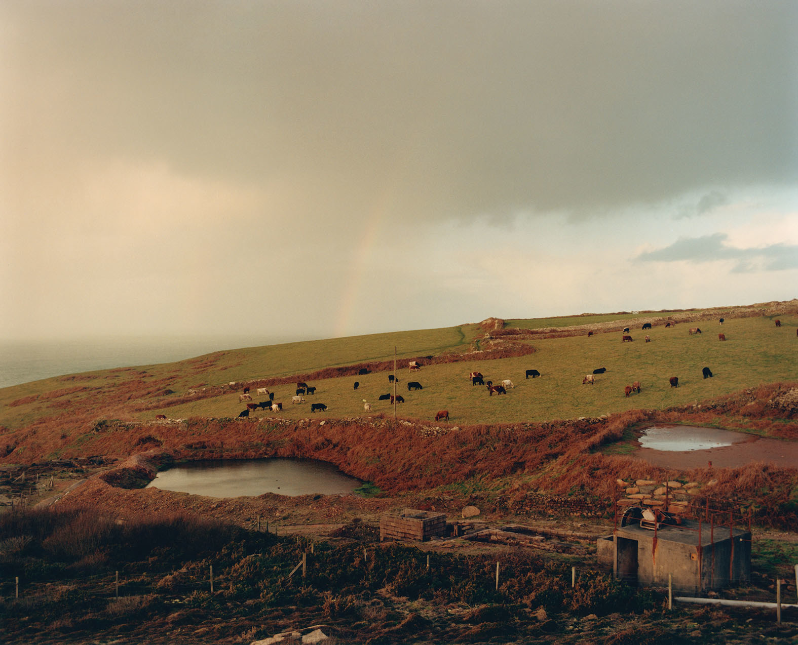 A scene showing cows grazing on a small green hill alongside a flowing body of water