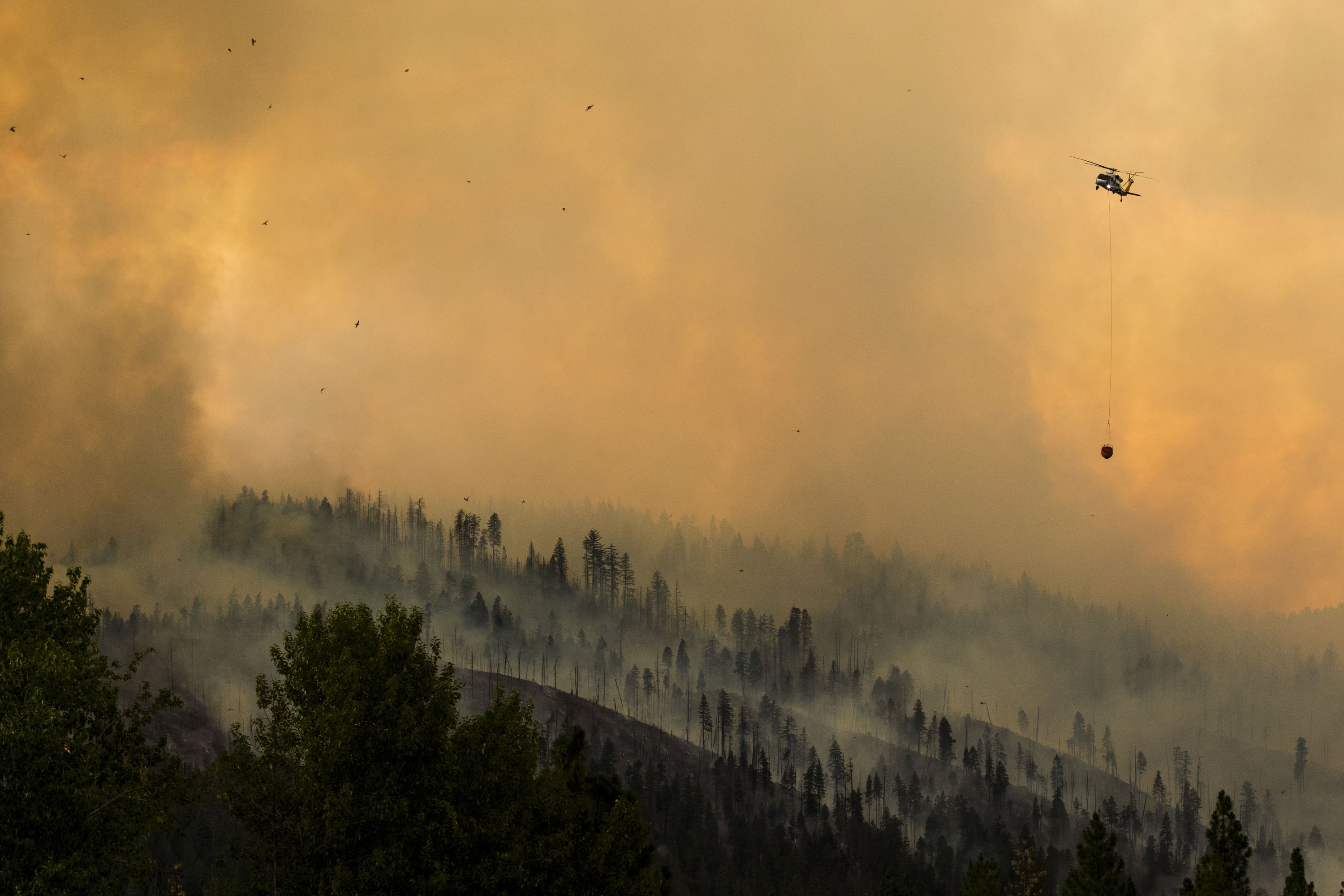 A helicopter flying through a smoky sky over a forest carries a pouch of water below it