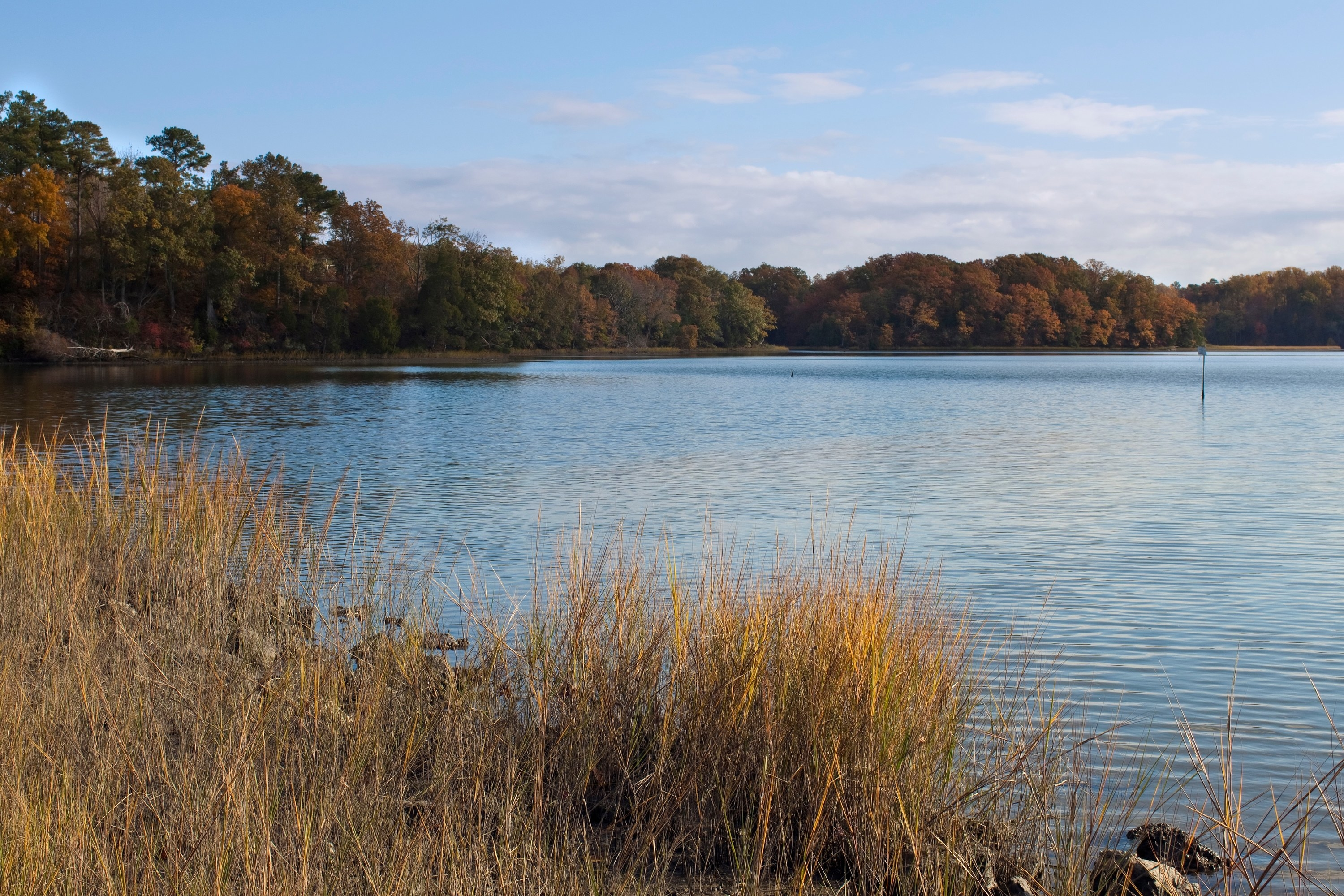 A clear and calm part of the Chesapeake bay is foregrounded by dry shrubbery.