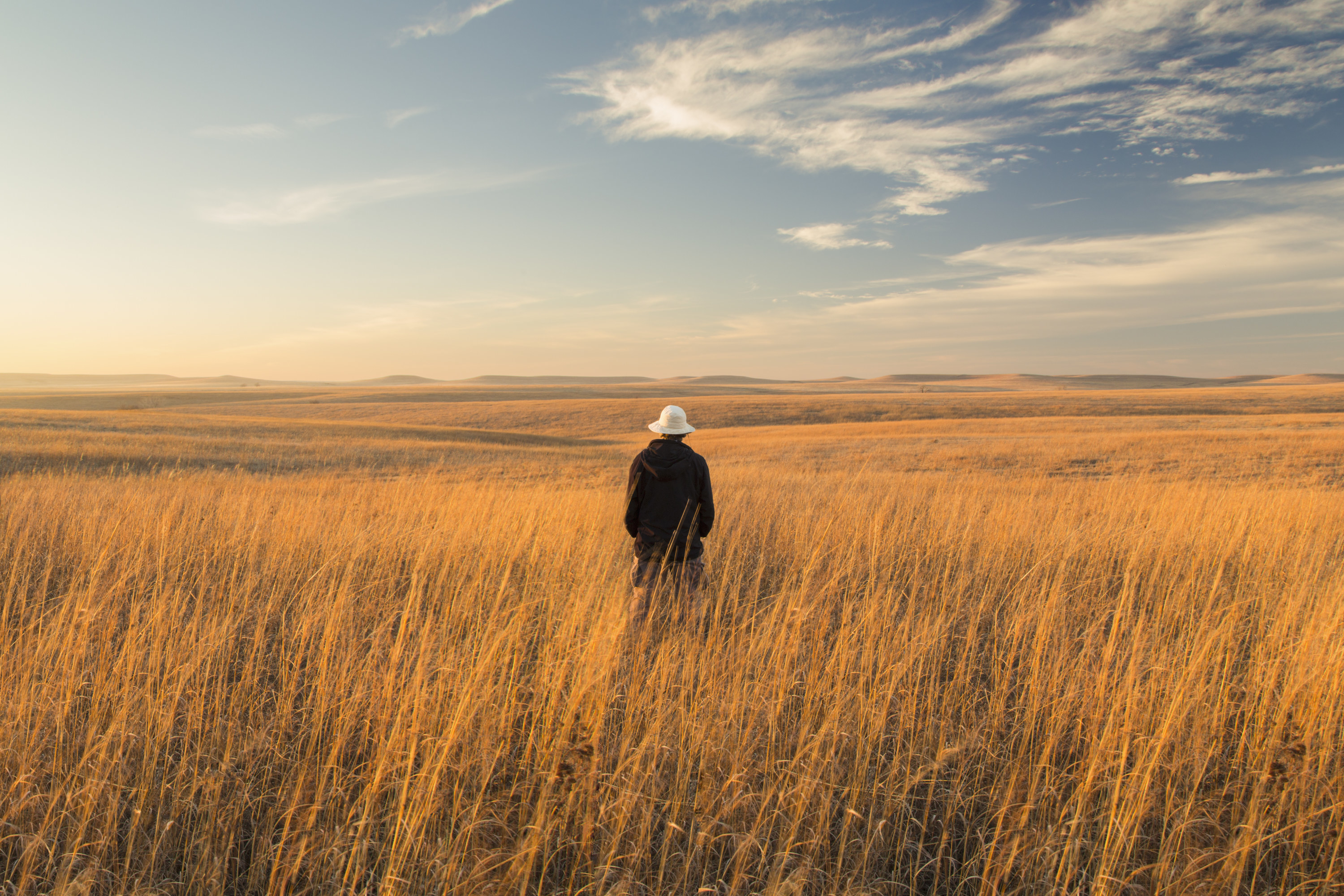 A person with their back turned looks out onto the serene Tallgrass Prairie.