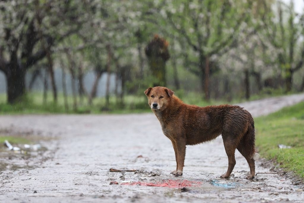 A dog standing in the rain