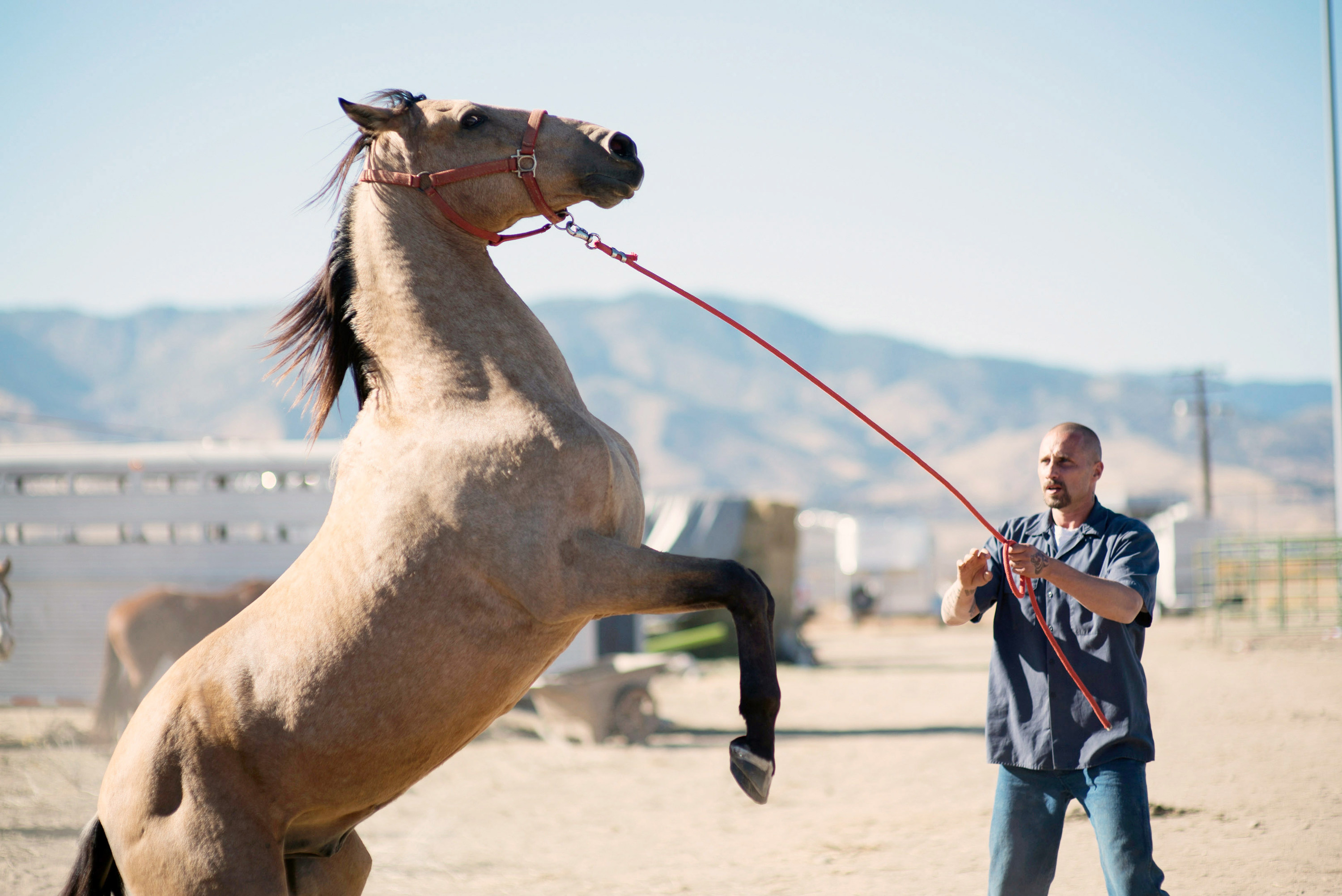 Matthias Schoenaerts attempts to tame a horse in The Mustang