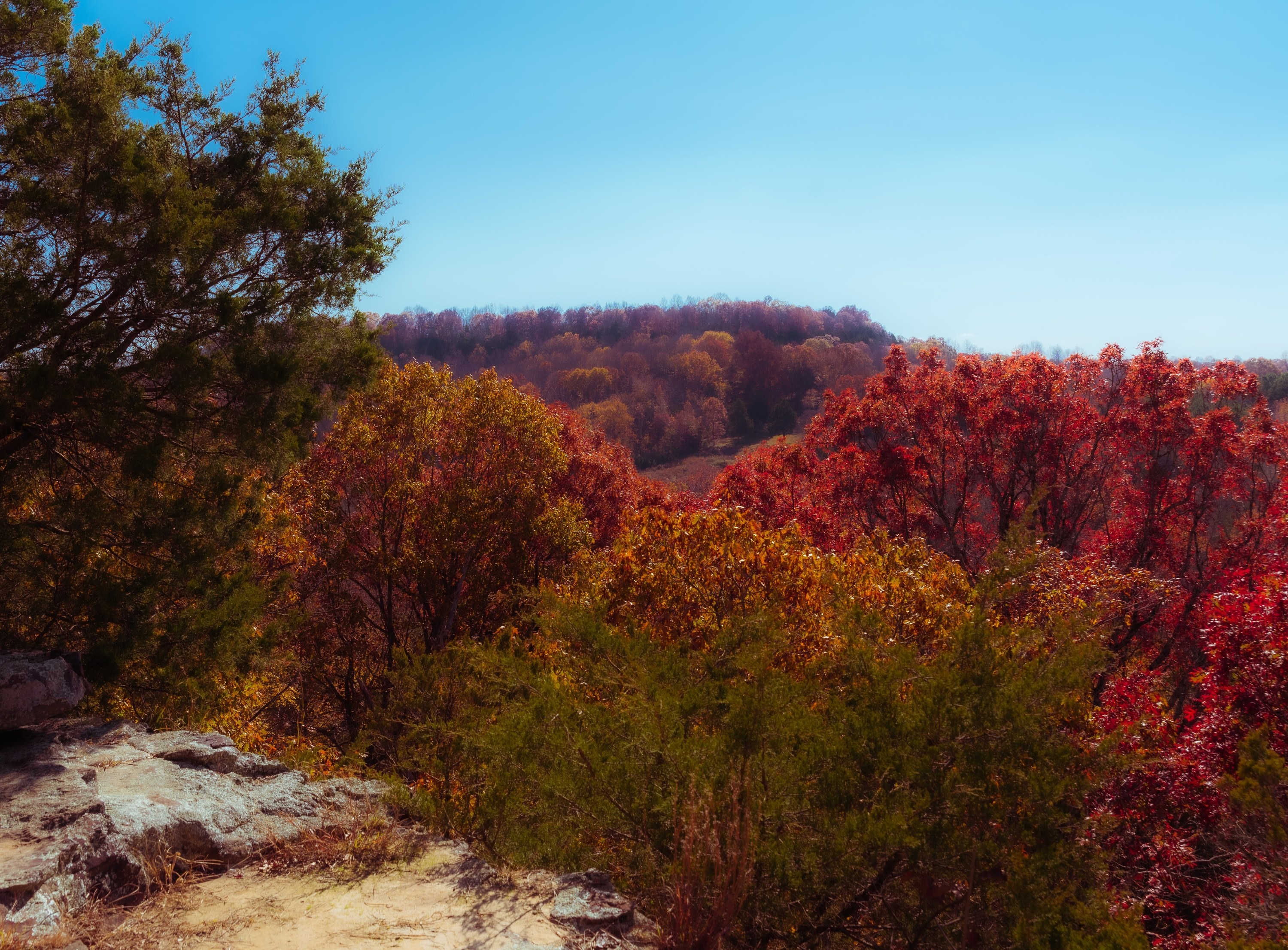 Photo of fall trees at theFerne Clyffe State Park