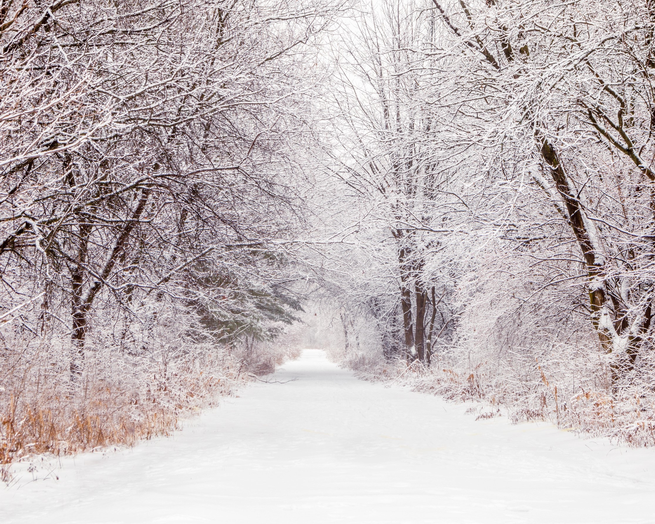 Photo of theNorth Branch Trail in winter