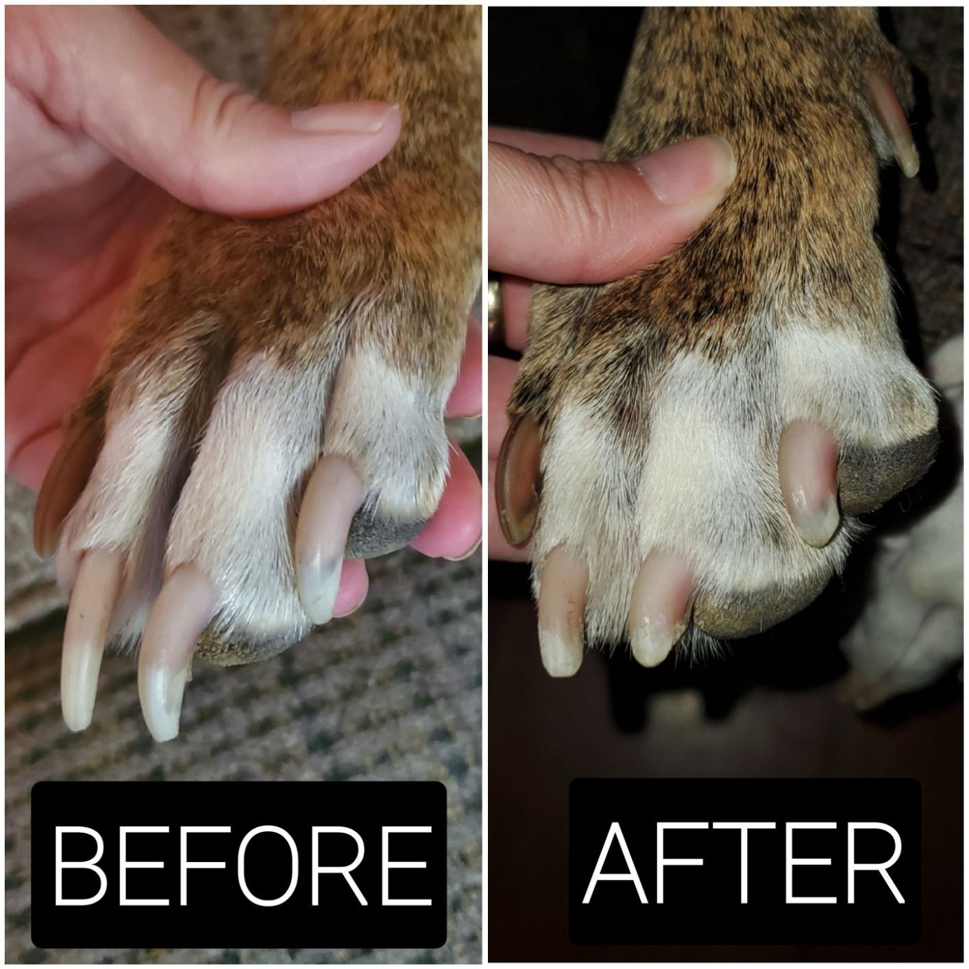 Before photo of a dog's overgrown nails and an after photo of the same dog with nails that are neatly trimmed
